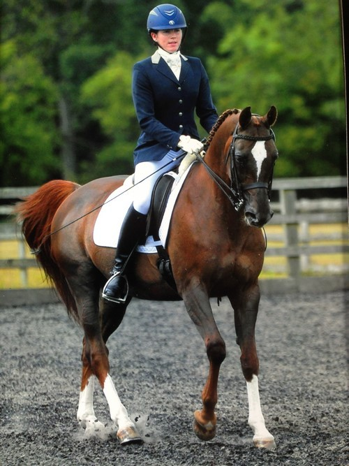 Arabians in the Dressage Arenas: An Interview with Maria Pook