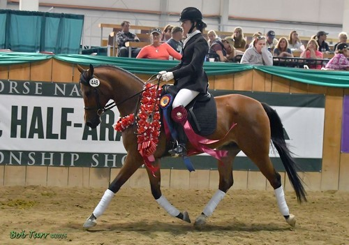 Beon Alla Czar Earns The Horse of Course High Score Award at 2016 Sport Horse National Arabian & Half-Arabian Championship