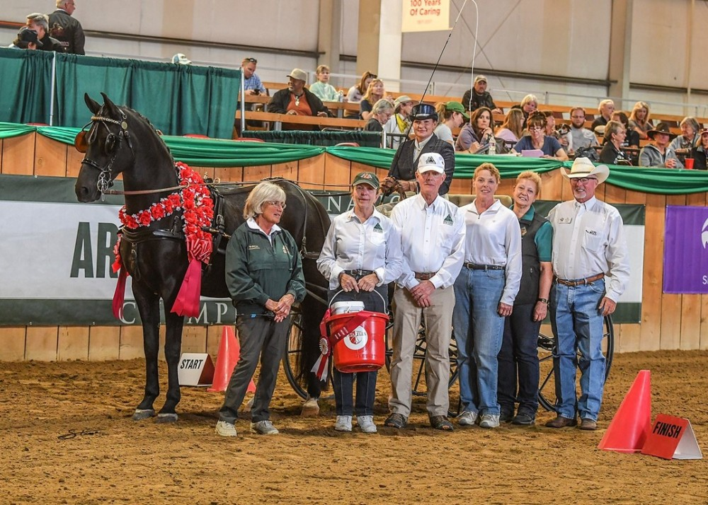 Carriage Driving Horse Crowned with Vita Flex Victory Pass  Award at 2016 Arabian Sport Horse National Championships