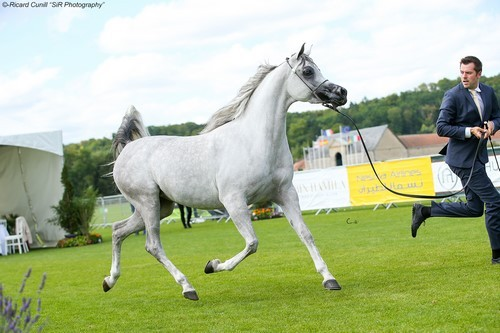 Chantilly 2017: AHO World Cup & Breeders' Championship Europe
