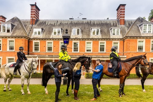 London's Hyde Park Police Horses Line Up for National Equine Health Survey
