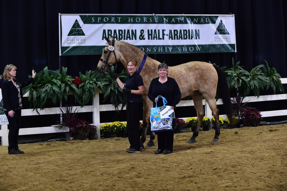Omega Alpha Healthy Horse Award Strikes Gold with 'Akceptional' Choice at AHA Sport Horse Nationals
