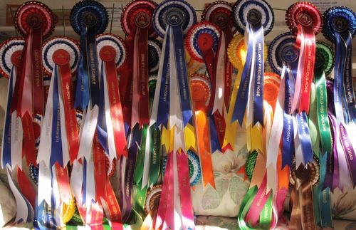Teenagers Triumph in Performance Horse Awards