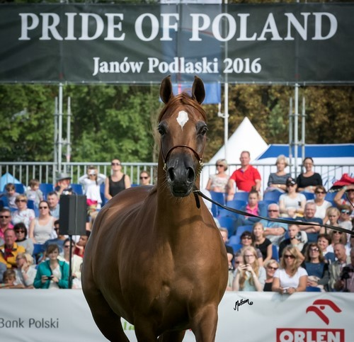 The 2016 Polish National Championships