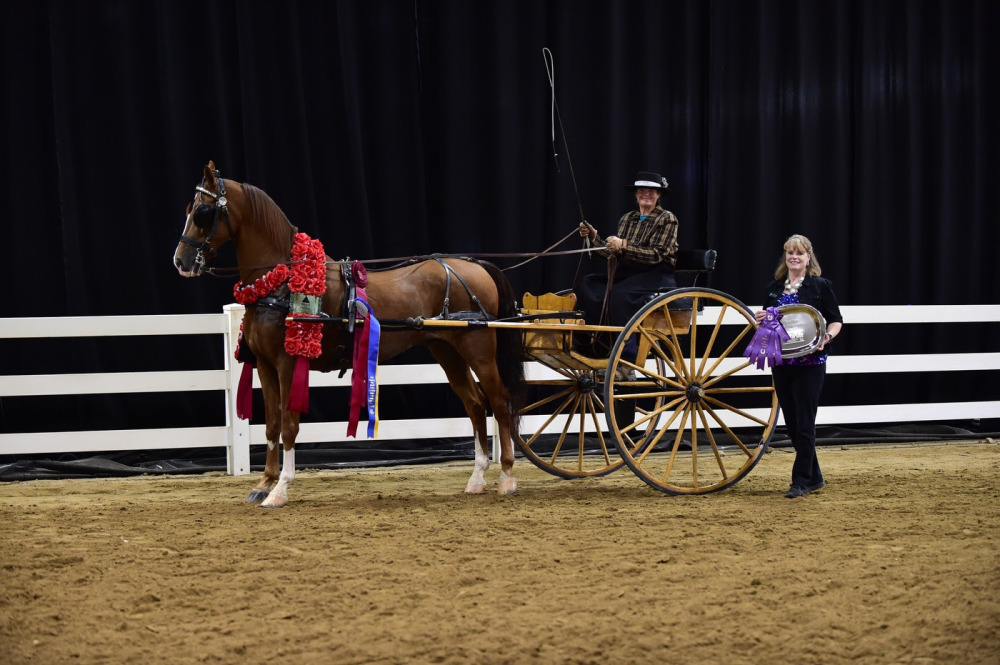 TheraPlate Crowns Slim Shady its Peak Performance Award Winner at AHA Sport Horse Nationals