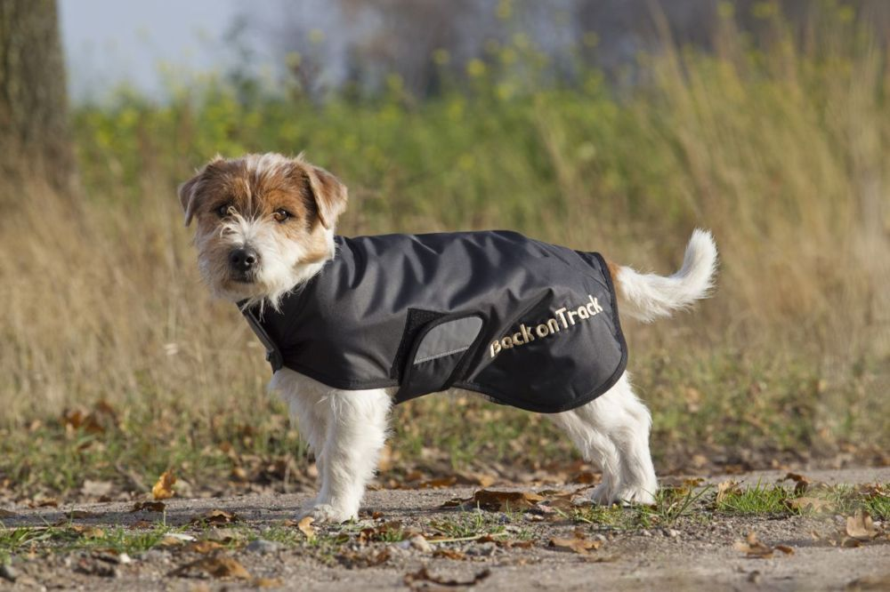 Back on Track® introduce new selection of high tech dog rugs