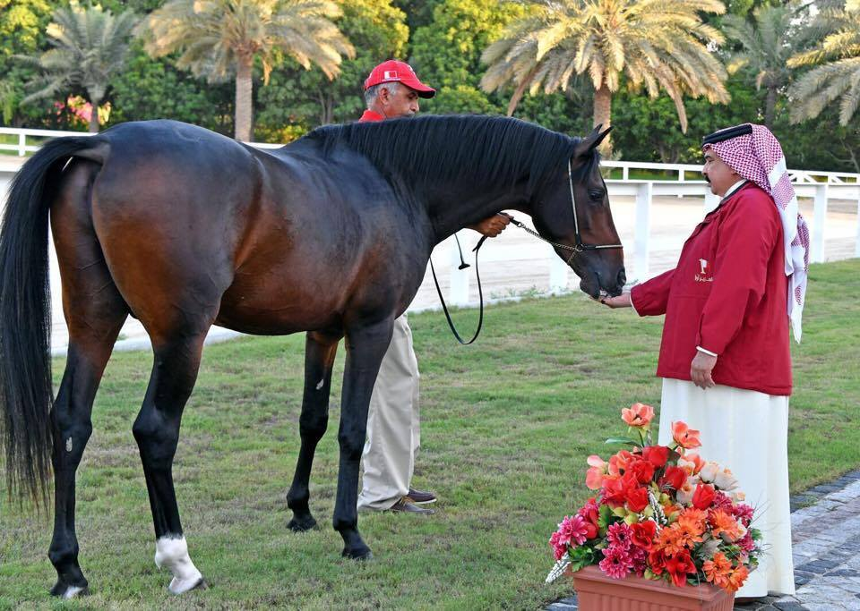 HM The Queen gifts Arabian horse to HM The King of Bahrain