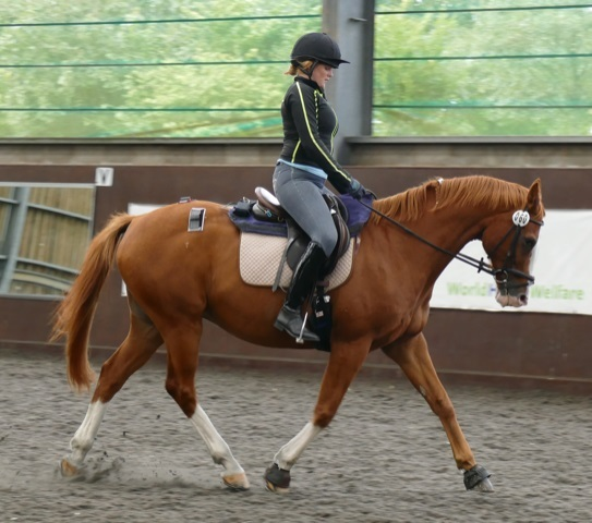Landmark pilot study addresses effects of rider weight on equine performance