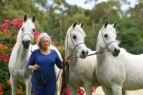 Simeon Stud – Celebrating Sixty Years of Breeding