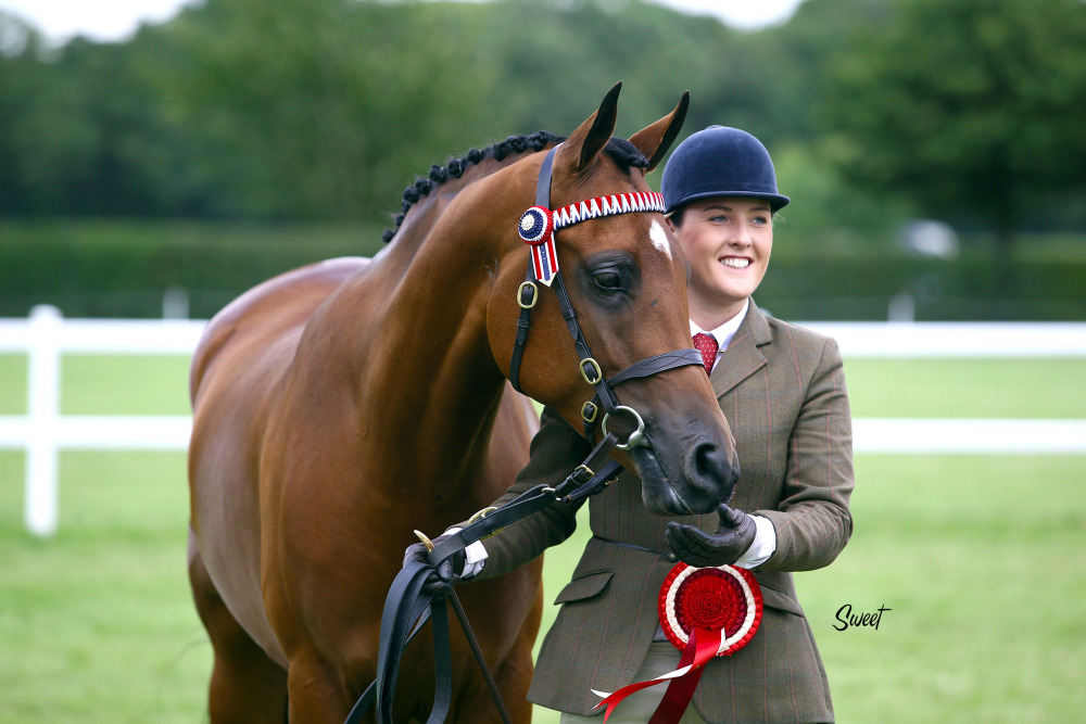 The 2017 British National Championships: Anglos & Part-breds