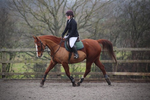 The Girl with the Jumping Arabians: Setting up for Success