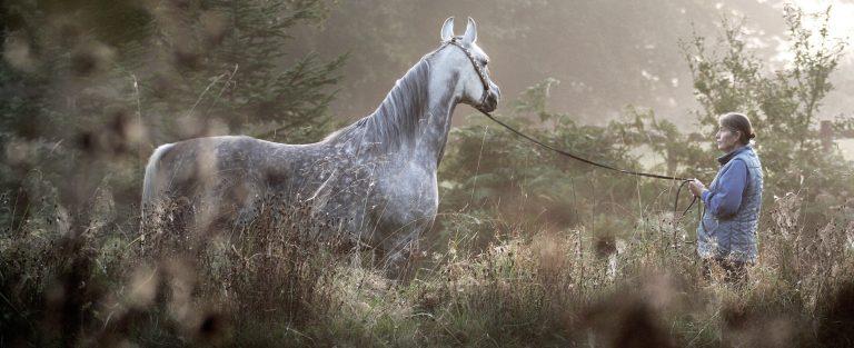 Lodge Farm Arabians Part II
