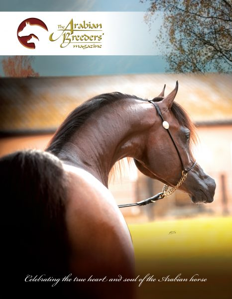 The Arabian Breeders Magazine Herodotus Al Shiraa Al Shiraa Arabians