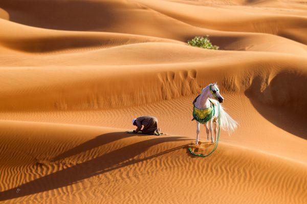 Arabian Breeders in the United Arab Emirates