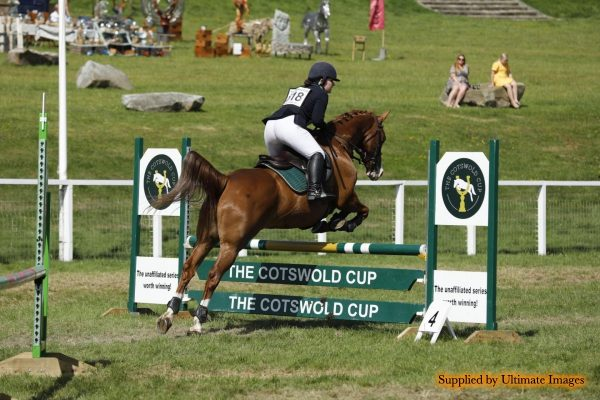 Avonbrook Odin in the showjumping