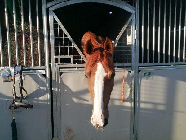 Avonbrook Odin stabled at Champs (c) Katherine Bertram