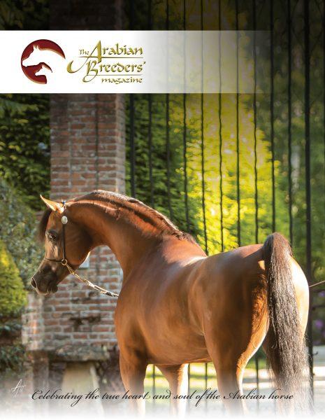 The Arabian Breeders' Magazine RFI Unique