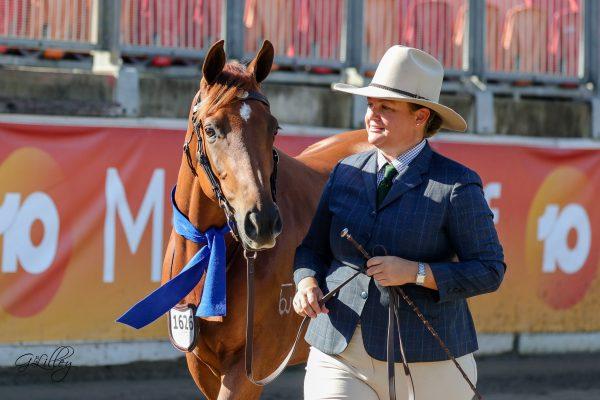 Jacqui Langfield's Arabian Stockhorse Gemsfield Clementine winner of the Derivative Filly under 2 yrs
