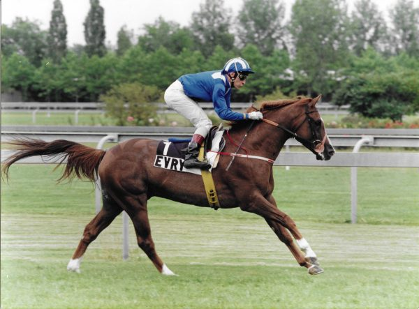 Bengali d'Albert winning the Coupe d'Europe du Cheval Arabe at Evry in 1993, trained by Mrs G Duffield and ridden by Thiery Jarnet