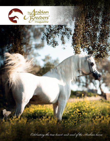 Cover star BK Latif The Arabian Breeders' Magazine