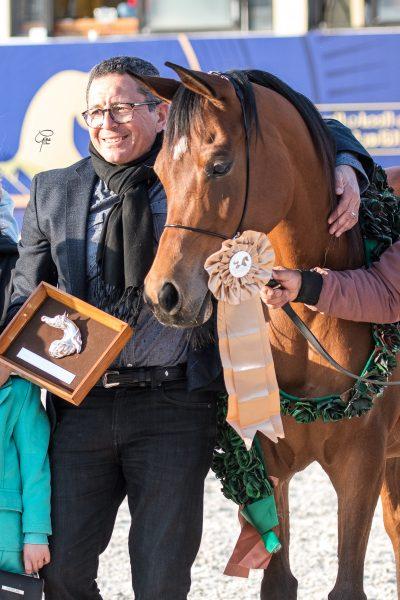 Fathia al Najediah bronze junior mare
