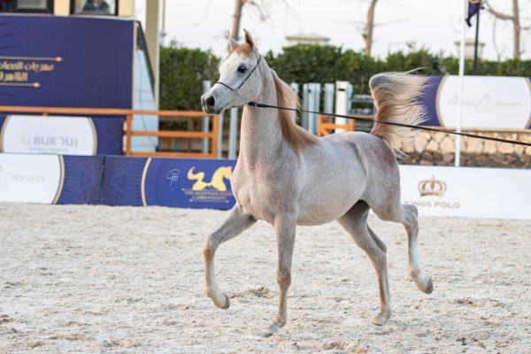 Sheikh Al Ashraaf bronze junior male