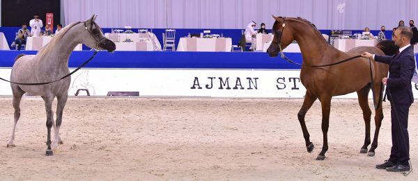 Dubai International Arabian Horse Championships RFI Unique