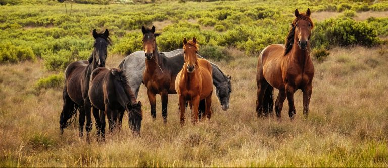 Veterinary Dermatologist warns of risk of equine parasitic skin disease