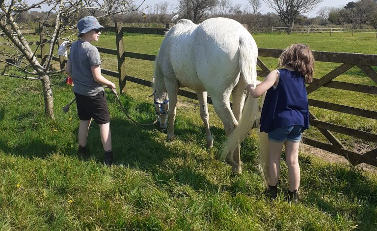 Arabians – suitable as a first horse?