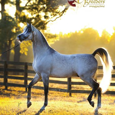 The front cover of The Arabian Breeders' Magazine Volume II Issue III  - Exxalt