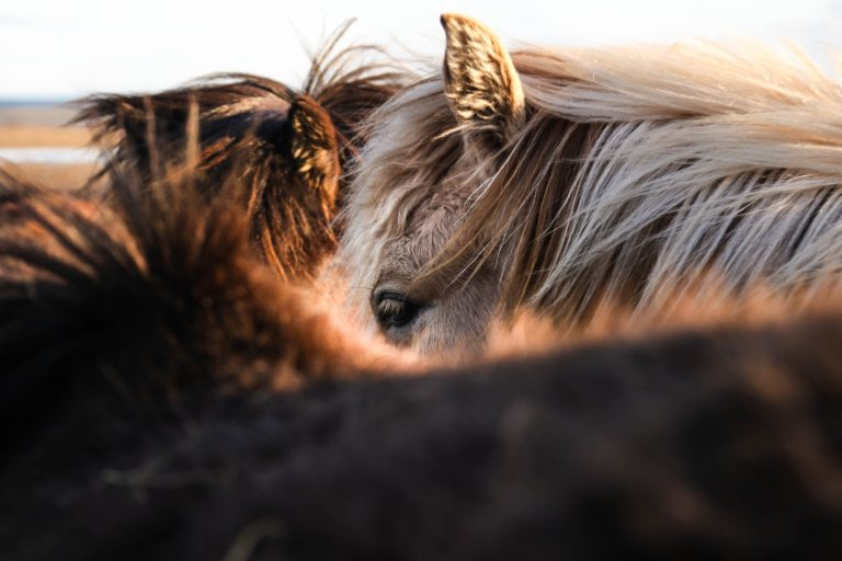 Weight gain is major concern for horse owners, reveals lockdown survey